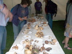 Mushroom foray ID table